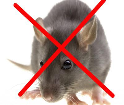 Kiểm soát chuột gây hại