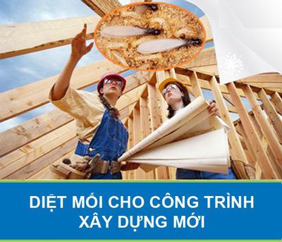 Phòng chống mối cho công trình xây dựng mới