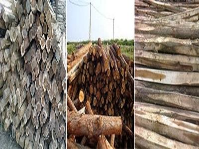 Ván cốp pha gỗ