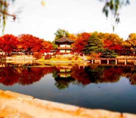 Tour Hàn Quốc: Seoul - Nami - Everland - Jeju