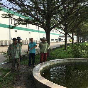 Dịch Vụ Chăm Sóc Cây Xanh Đô Thị
