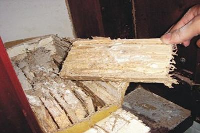 Dịch vụ diệt mối tận gốc tại nhà ở Hà Nội