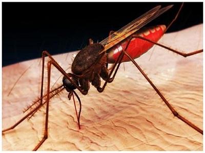 Phun thuốc diệt muỗi ở cơ quan doanh nghiệp