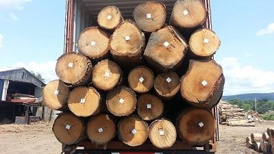 Gỗ Sồi Tròn (White Oak Logs)