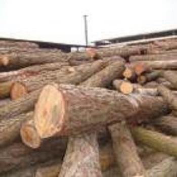 Gỗ Thông Tròn (Pine Logs)