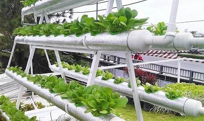 Thiết kế vườn rau sạch, rau thủy canh