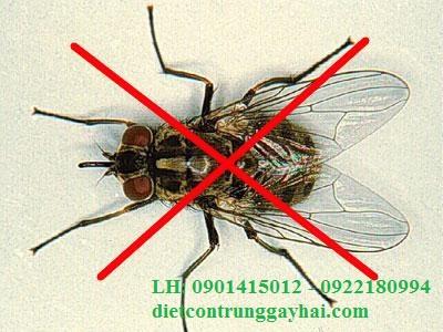 Dịch vụ diệt ruồi tại căn tin