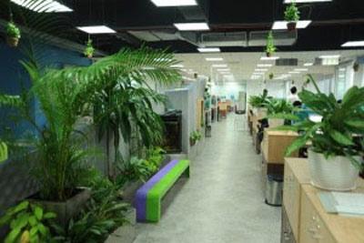 Dịch vụ chăm sóc cây cảnh cơ quan văn phòng
