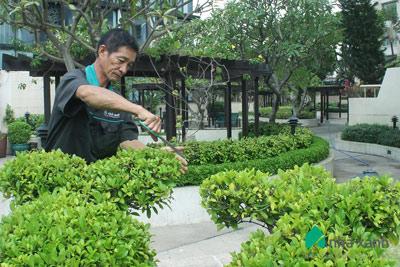 Dịch vụ chăm sóc cây cảnh chung cư khách sạn