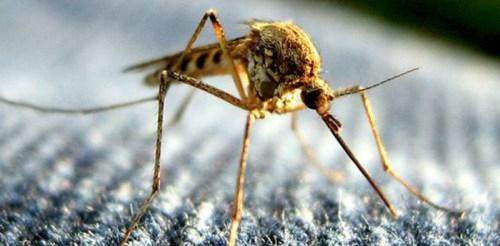 Dịch Vụ Kiểm Soát Muỗi