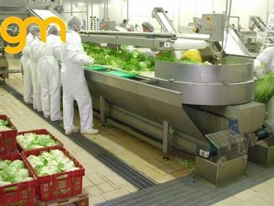 Băng tải lưới inox rửa rau quả, trái cây