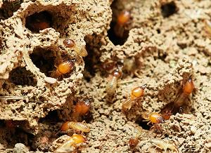 Dịch Vụ Diệt Muỗi, Kiến, Gián, Mối
