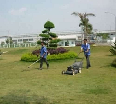 Dịch Vụ Bảo Dưỡng Chăm Sóc Cây Sân Vườn Biệt Thự